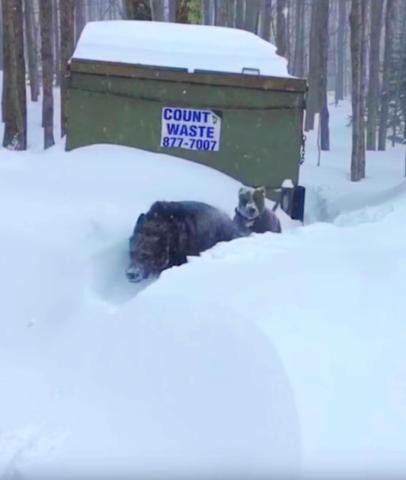Knuckles-rimane-intrappolata-nella-neve 2
