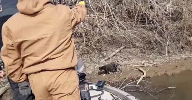 il-salvataggio-del-dolce-cucciolo