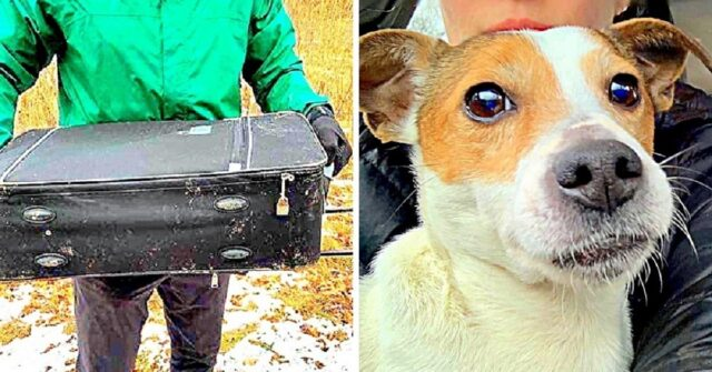 ragazzi-trovano-cane-abbandonato-in-una-valigia-la-polizia-vuole-trovare-il-responsabile