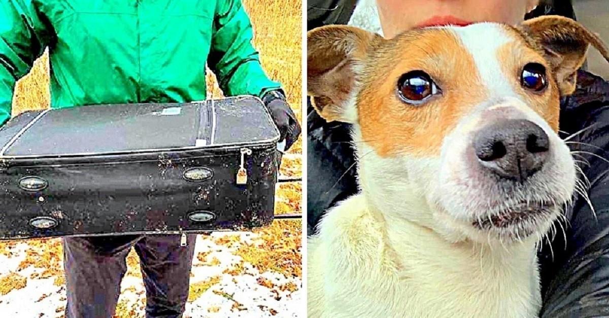 Ragazzi trovano cane abbandonato in una valigia