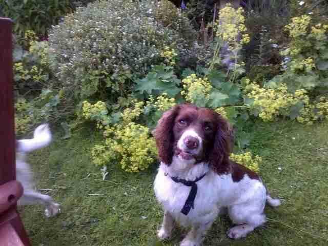 Chester-il-cane-che-vuole-giocare-con-la-statua 2