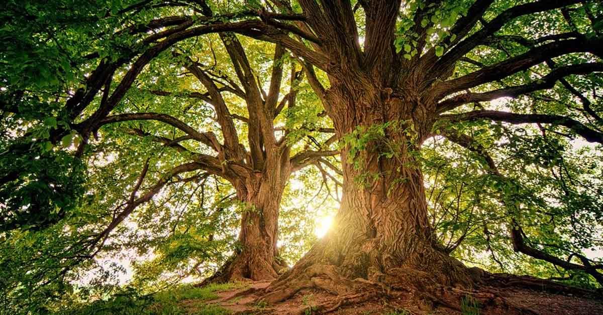 Foreste italiane: dieci miti da sfatare