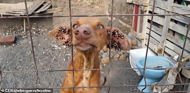 Salvati cinque cani in fin di vita e completamente ricoperti