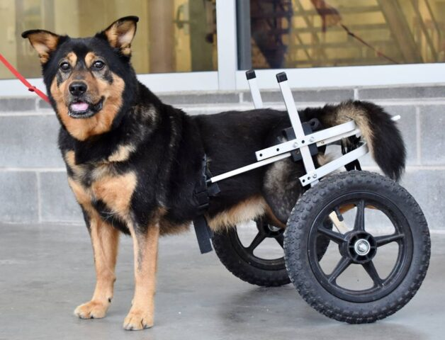 Bandit il cane che non voleva adottare nessuno
