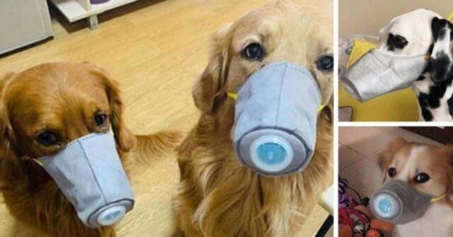 Coronavirus e animali domestici. Tutto ciò che bisogna saper