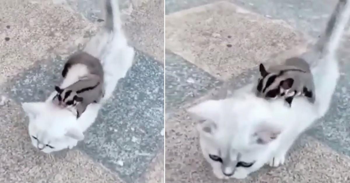 Gattino che gioca con uno scoiattolo