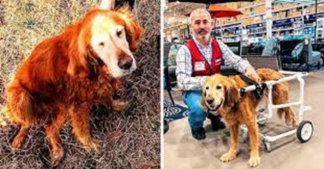 Willow-il-cane-abbandonato-a-causa-della-sua-malattia-ha-trovato-la-famiglia-perfetta