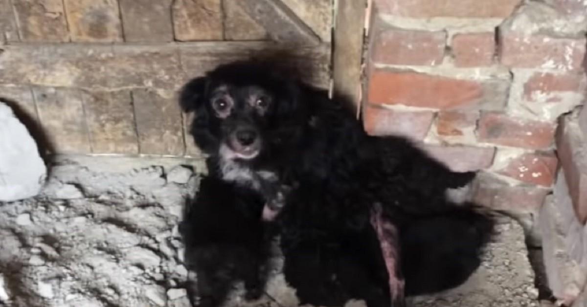cagnolina-nera-cuccioli