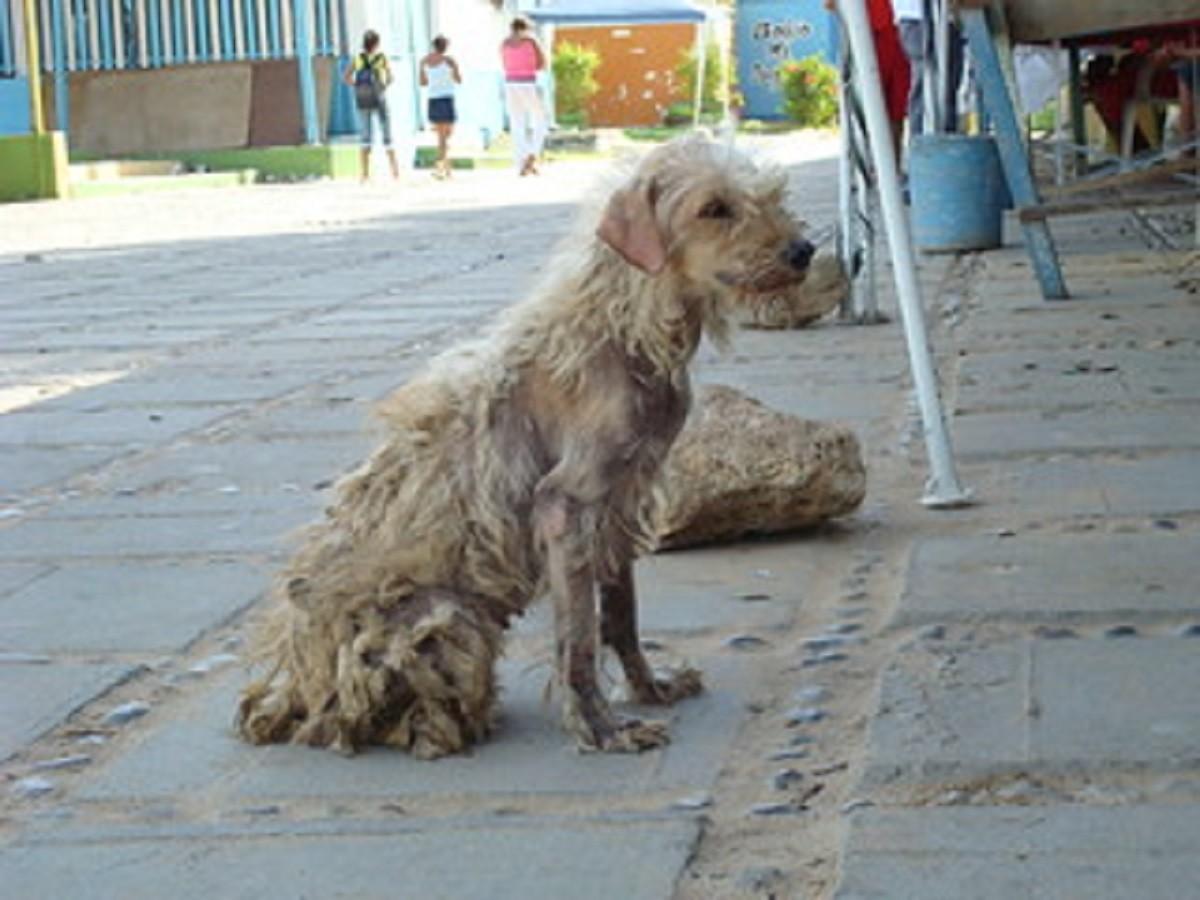 Gennaro, il cane ritrova il padrone dopo 10 anni ma il suo c