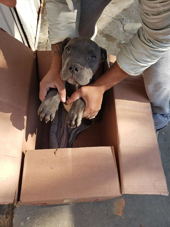 cane-scatola