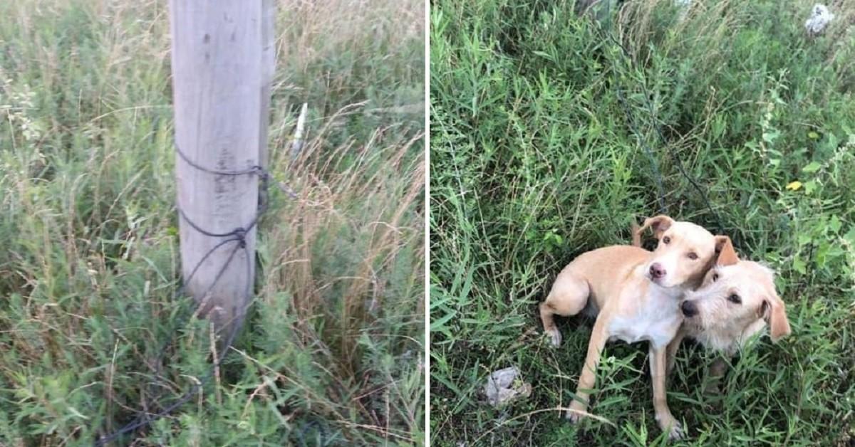 Donna abbandona i suoi due cani legandoli con un filo a un palo