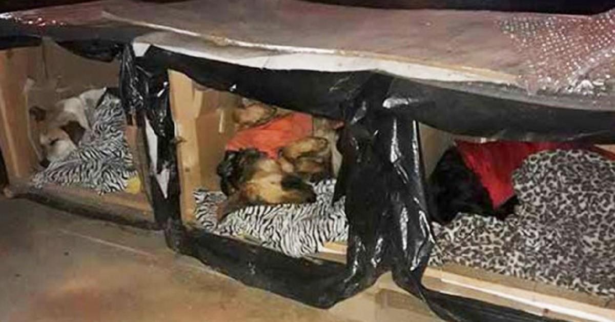 Eroe anonimo realizza box termici per proteggere i cani di strada dal freddo