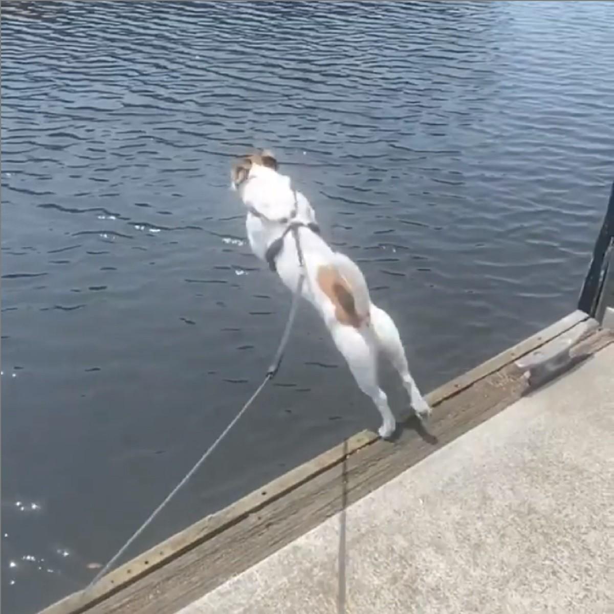 cucciolo-jack-russell