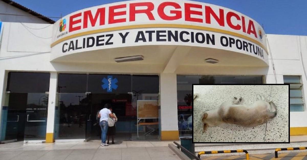 cucciolo-ospedale