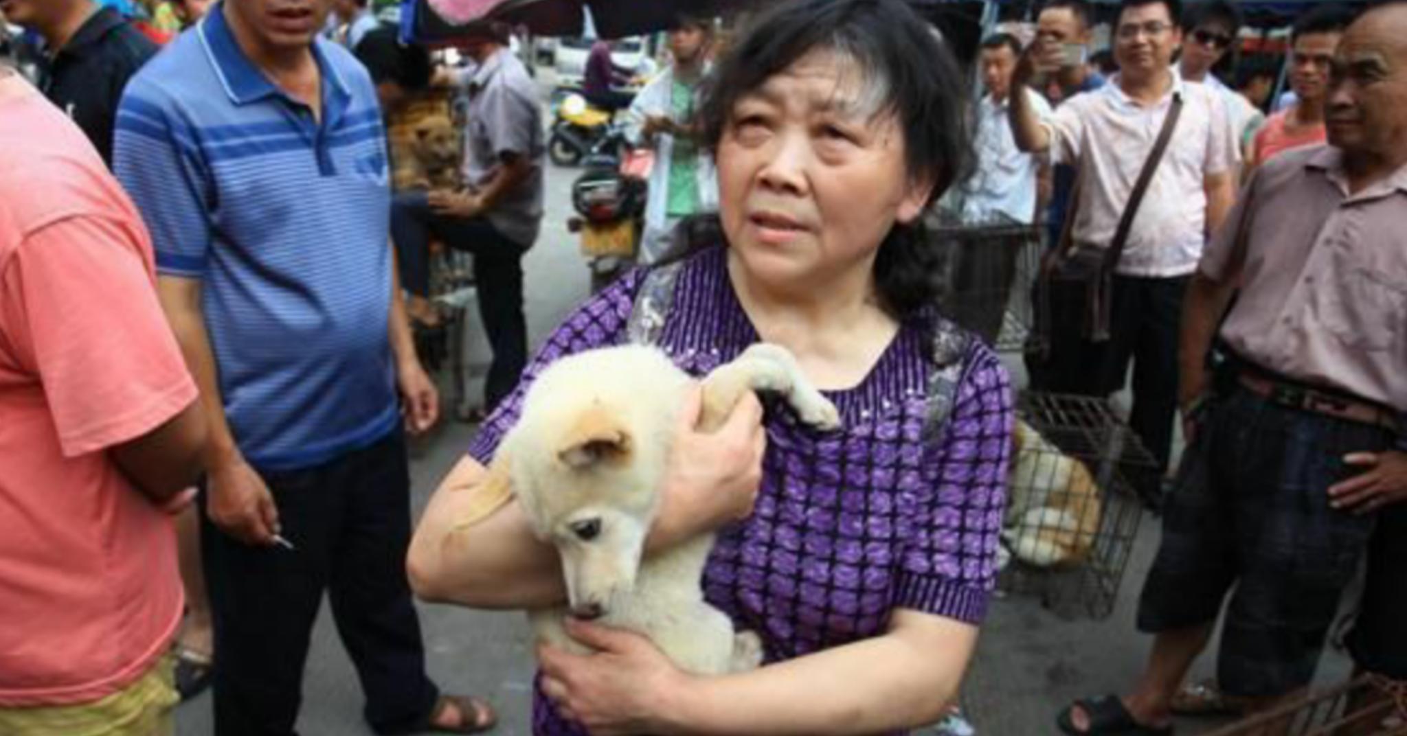 La Cina si prepara a vietare la carne di cani e gatti