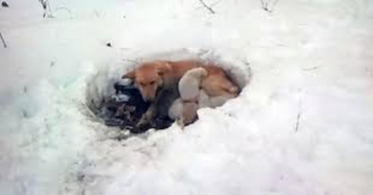 Il salvataggio di Snowbelle e dei suoi cuccioli, trovati in mezzo alla neve, a morire di fame e di freddo