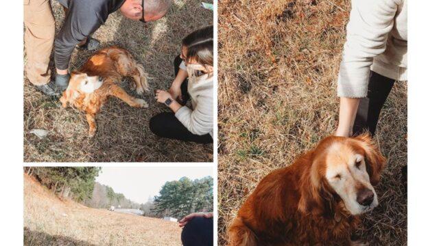 Willow-il-cane-abbandonato-a-causa-della-sua-malattia