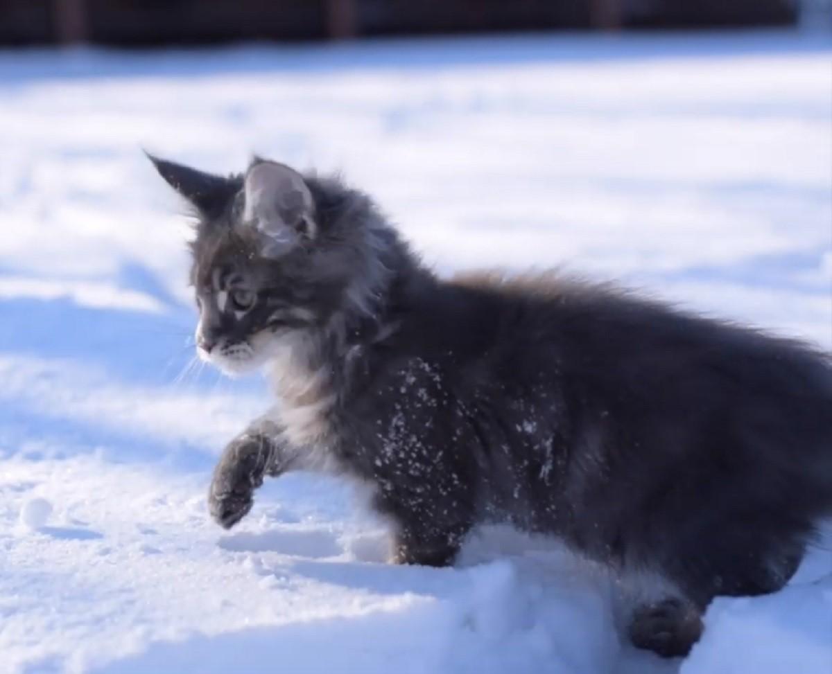 gattino-neve