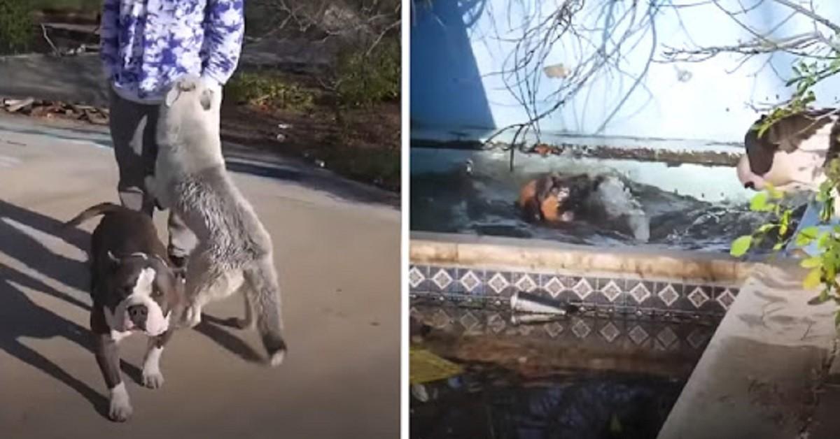 ragazzi-salvano-la-vita-del-cane-caduto-in-acqua-in-grabe-pericolo