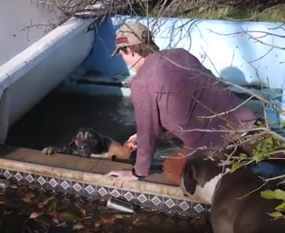 ragazzi-salvano-la-vita-del-cane-caduto-in-acqua 2