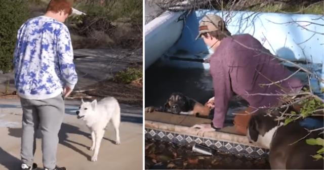 ragazzi-salvano-la-vita-del-cane-caduto-in-acqua 1