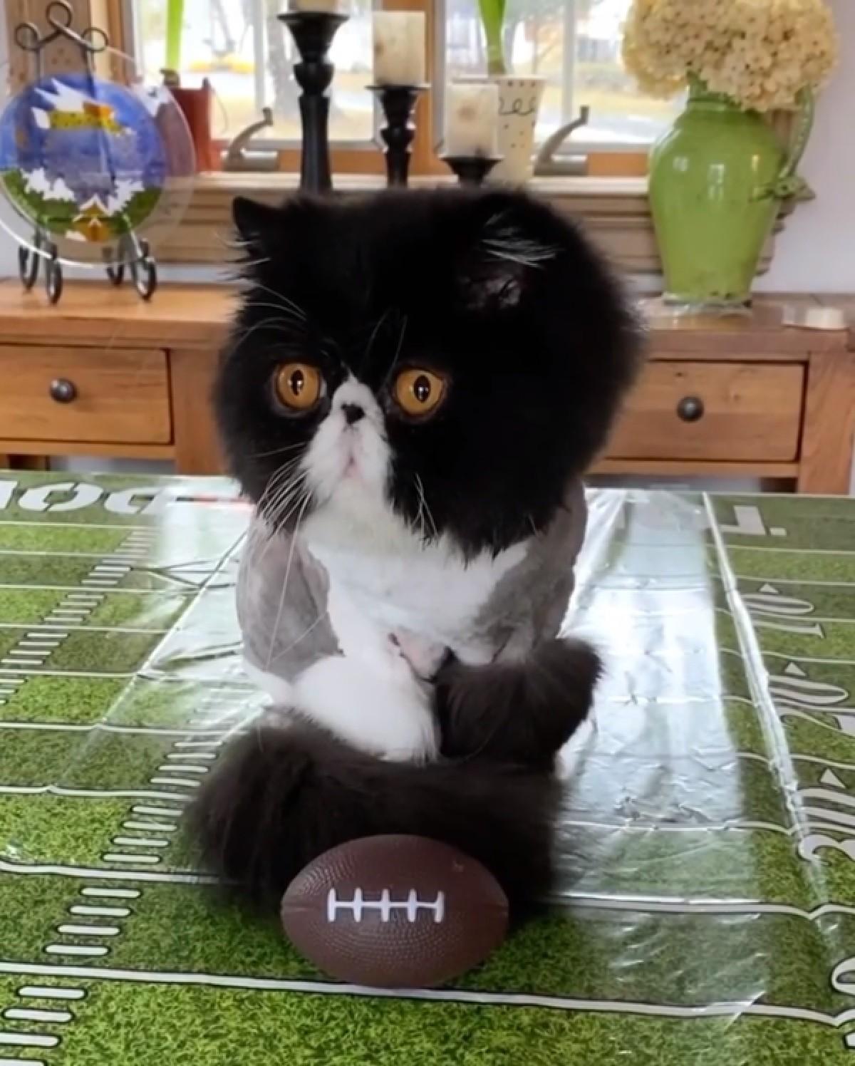 walter-gattino-persiano