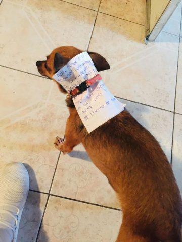 Il-cagnolino-che-esce-a-fare-la-spesa