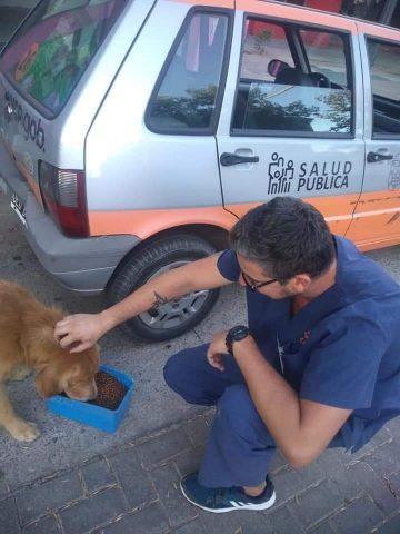 Coronavirus Argentina: un comune distribuisce cibo ai cani r