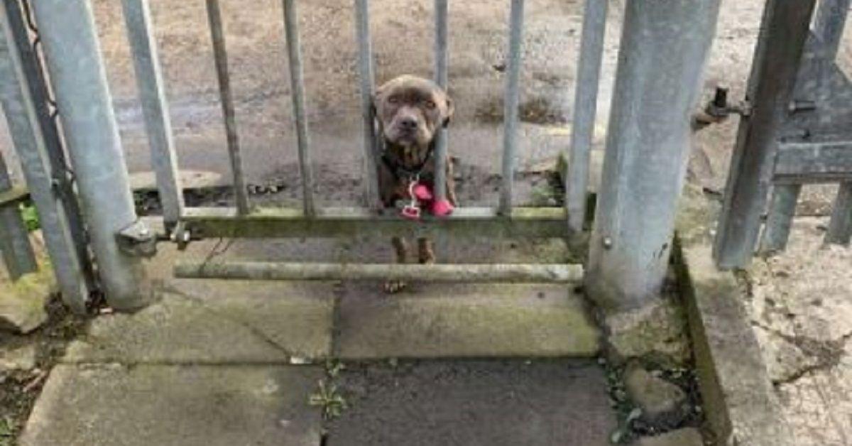 Un dolcissimo cagnolino al rifugio aspetta che qualcuno lo noti