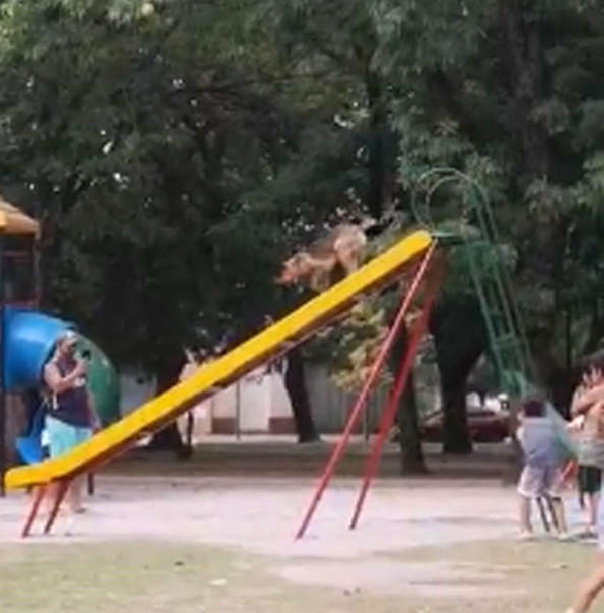 cane-parco-scivolo