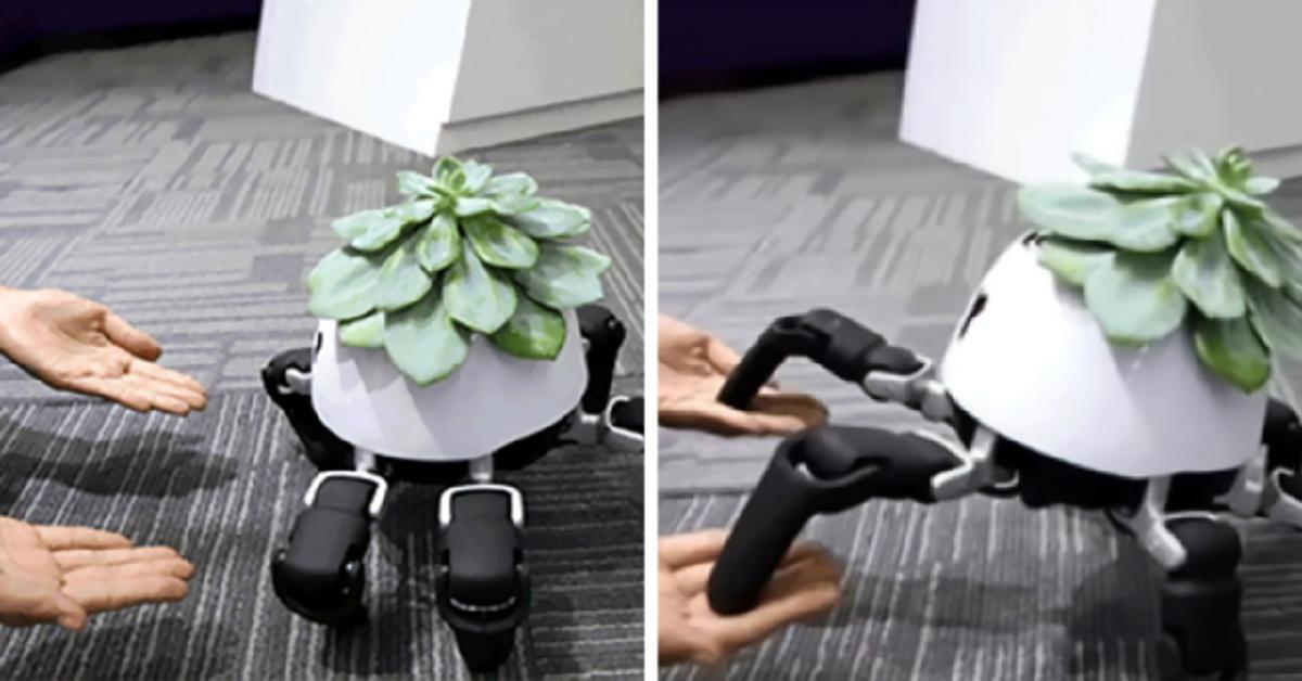 Il vaso per fiori robot intelligente che segue la luce del sole e chiede l'acqua