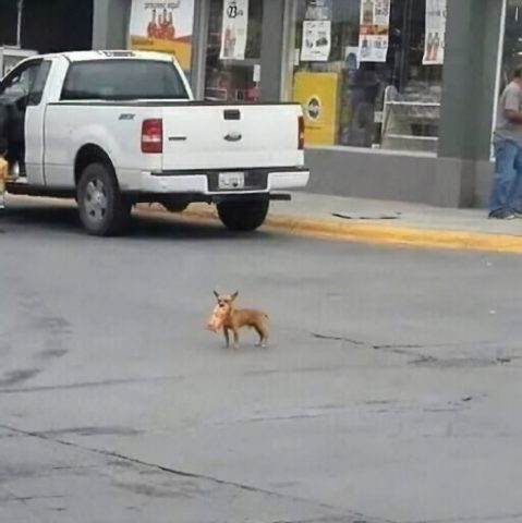 Il-cagnolino-che-esce-a-fare-la-spesa 2