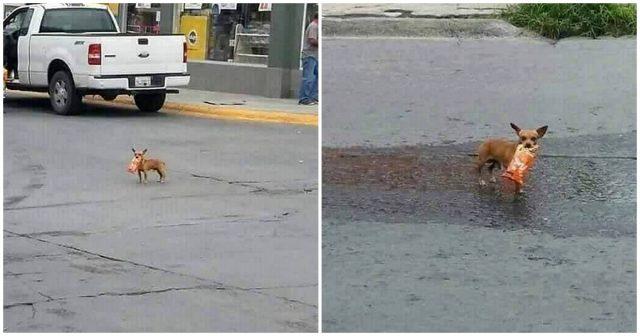 Il-cagnolino-che-esce-a-fare-la-spesa 1