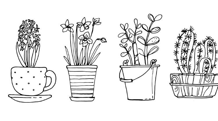 piante-vaso-disegni