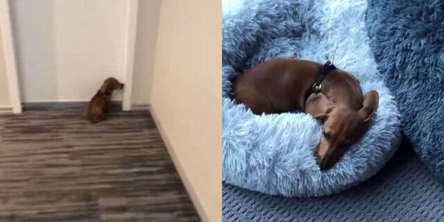 King-il-cane-che-ama-la-sua-camera