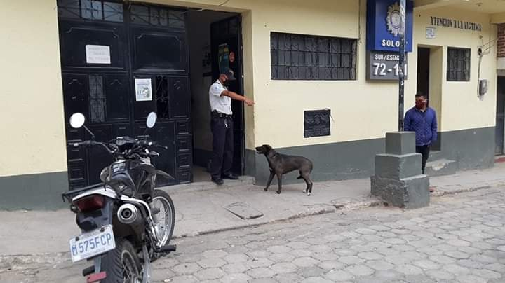 cane alla stazione di polizia