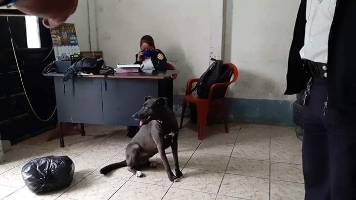 cane polizia