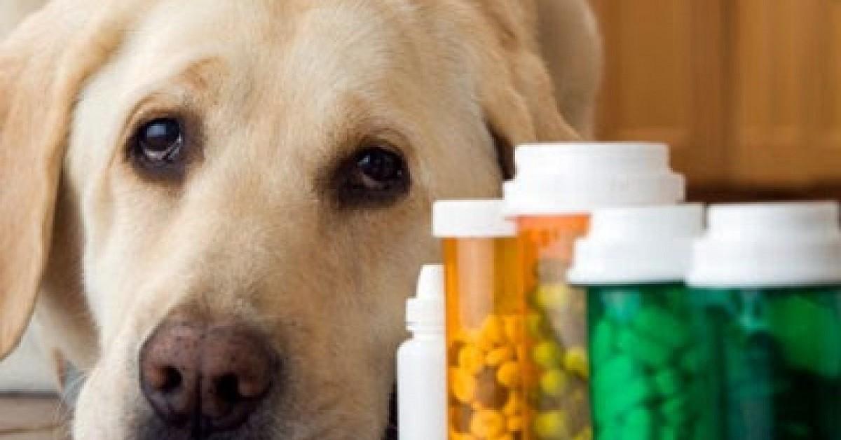 Escono-per-comprare-i-farmaci-al-cane-multati
