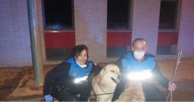 Golden Retriever chiede aiuto per salvare un altro cane polizia e pompieri lo hanno salvato 2