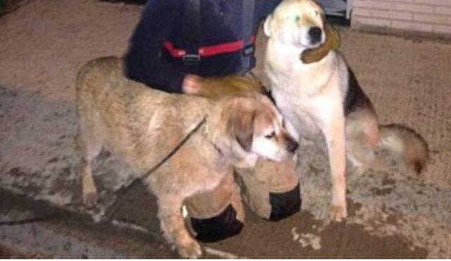 Golden Retriever chiede aiuto per salvare un altro cane polizia e pompieri lo hanno salvato