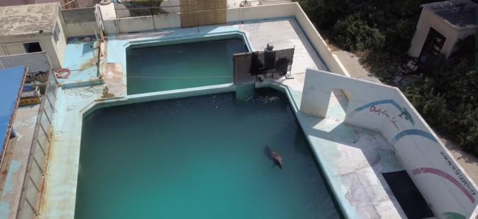 Honey, morto il delfino femmina che da anni viveva nell'aquarium giapponese