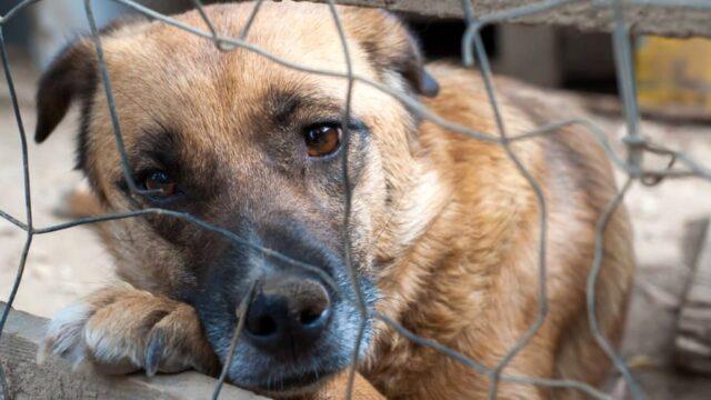 Incendio a Santena morti 5 cani solo uno è stato salvato 1