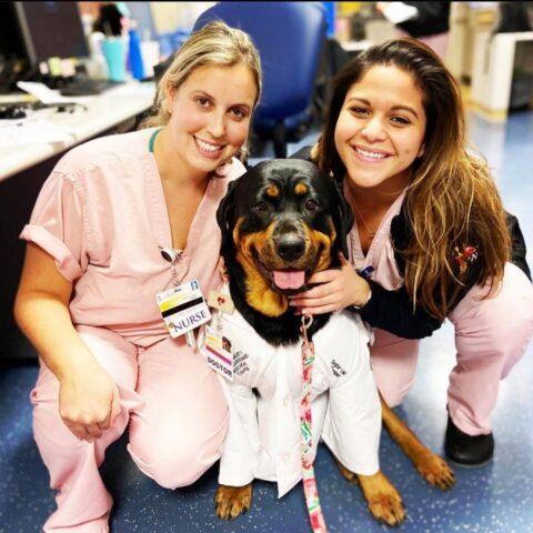 Loki il cane che aiuta i medici ed i pazienti durante questa Pandemia 1