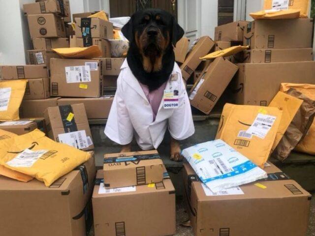 Loki il cane che aiuta i medici ed i pazienti durante questa Pandemia 2
