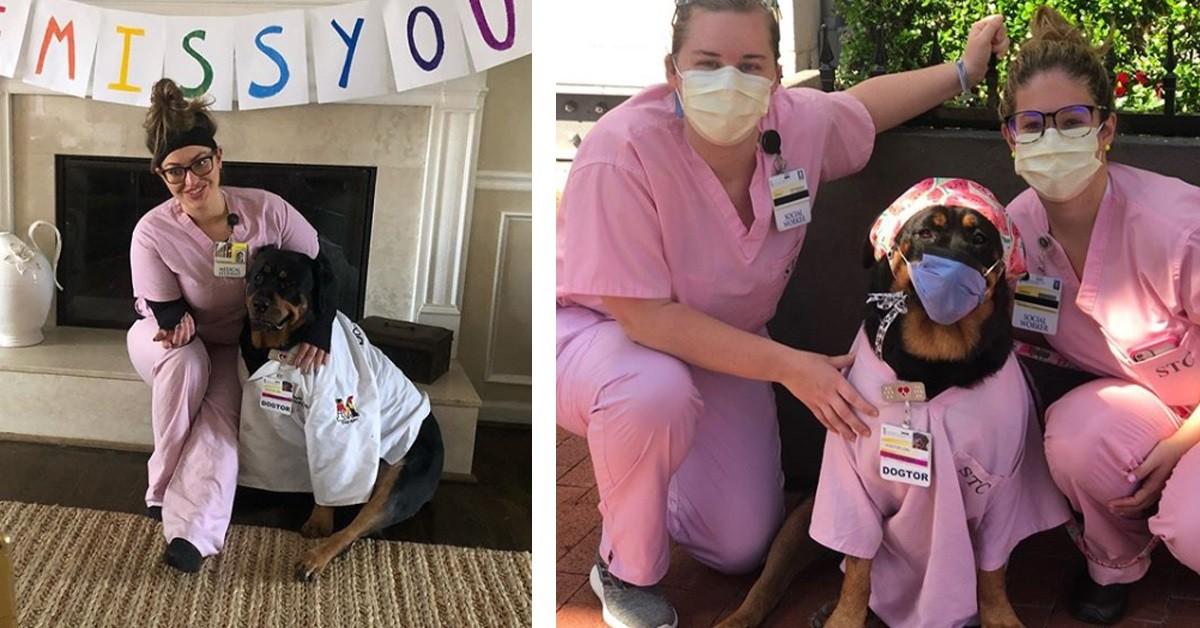 Loki-il-cane-che-aiuta-i-medici-ed-i-pazienti-durante-questa-Pandemia