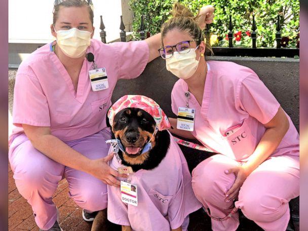 Loki il cane che aiuta i medici ed i pazienti durante questa Pandemia