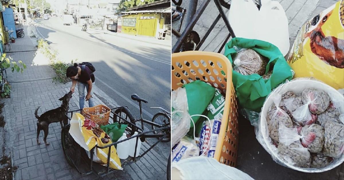 La donna dà da mangiare ai cani per non far partire loro la fame