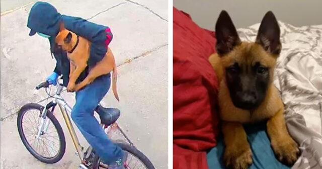 Max il cane portato via all'infermiera