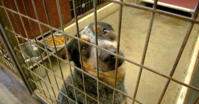 Pesaro scoperti due cani in alcuni box denunciato il proprietario
