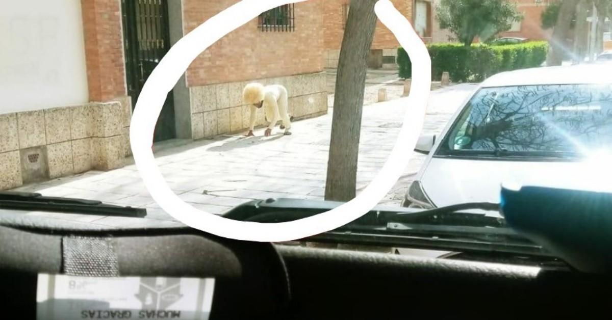 Toledo: uomo si traveste da cane per uscire dalla quarantena